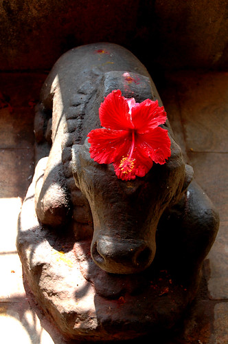 Nandi and the flower