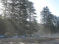 Sunlight through sea mist IMG_8224