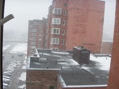 Sniegas pavasarį #4
