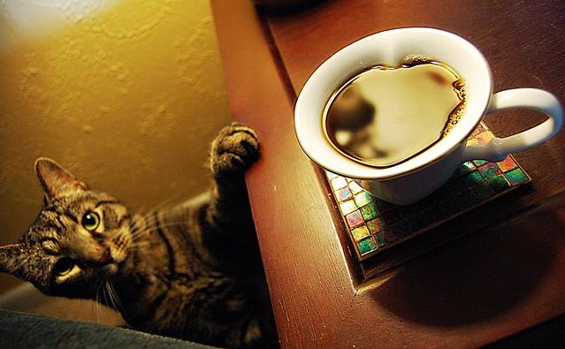 Aslan, Coffee Stalker