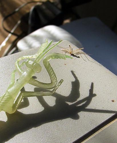 Plastic mantis
