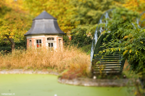 pond in miniature