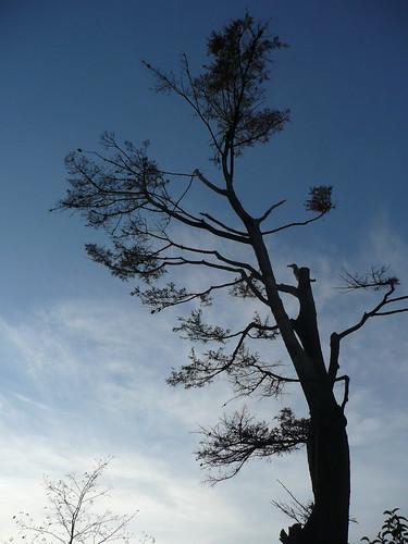 Oiseau-branche