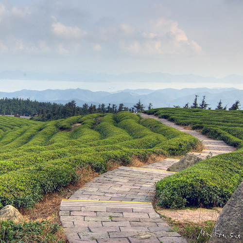Tea Mountain: Path by Jakob Montrasio.