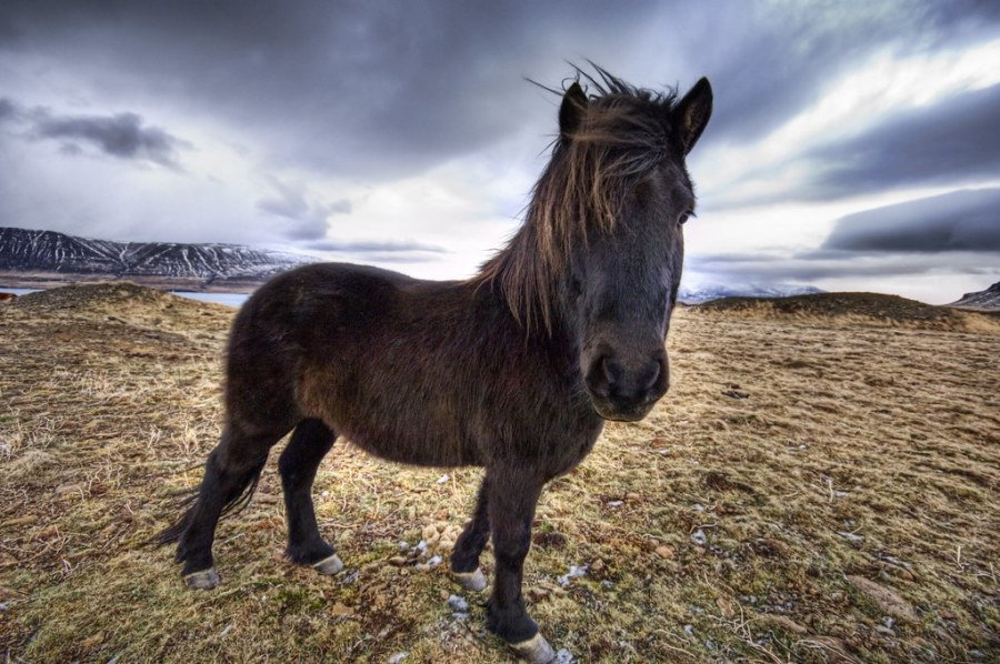The Fjords are Full of Horses