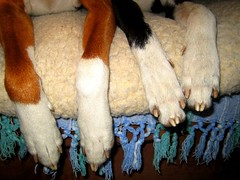 Paws cleaned - ready for diner! Pfoten geputzt - Abendbrooooot!