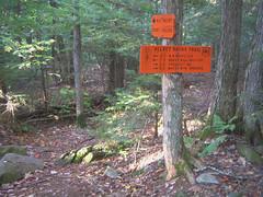 velvet rocks sign