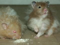 Bebong II (♂) & Berio II (♂)