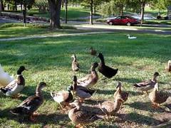 duck2007-10-05
