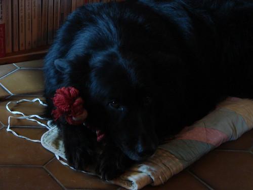 Bouba et son jouet