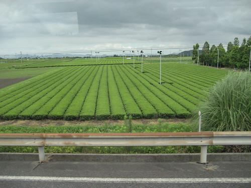 piantagioni di té Kyushu