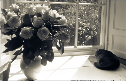 sunday afternoon: flowers, sunshine, snoozing cat
