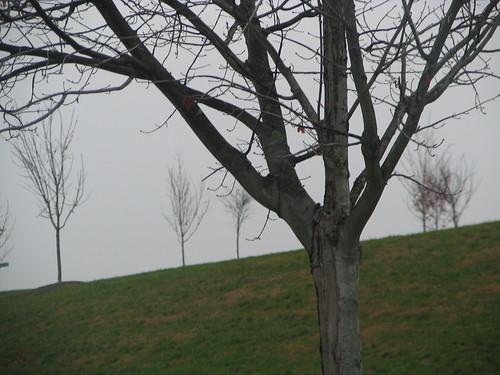 Gray UMBC Hill