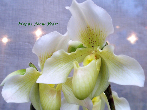 environmental new year
