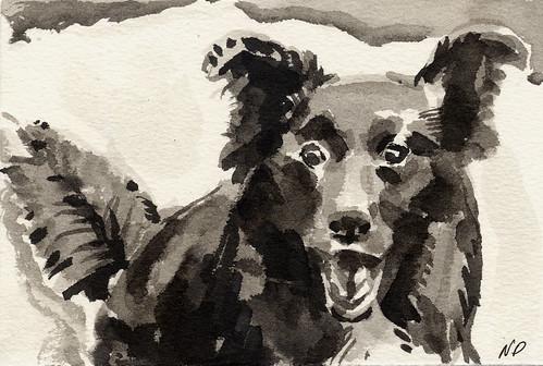 Johann the Dog