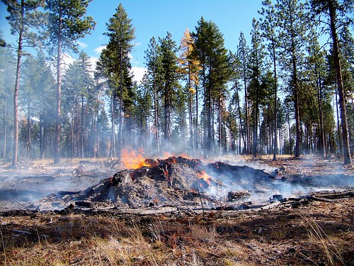 Burning slash pile