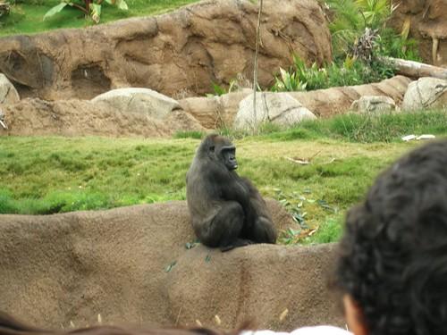 Mommy gorilla
