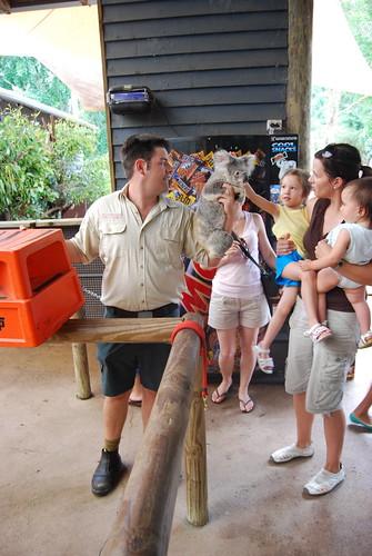 Petting a Koala