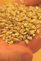 Roasted two-row barley