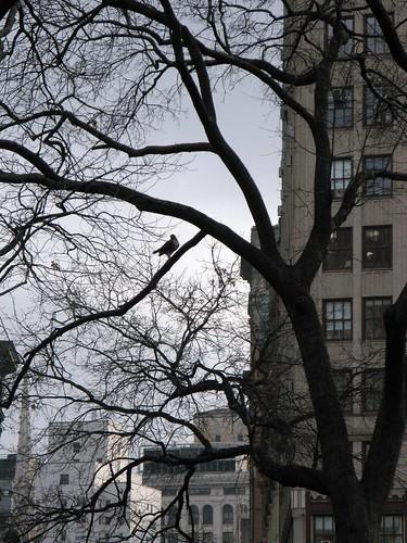 Union Square Hawk