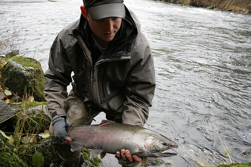 Oregon Coastal coho