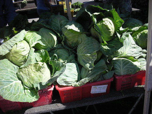 Cabbage snap for Astrid