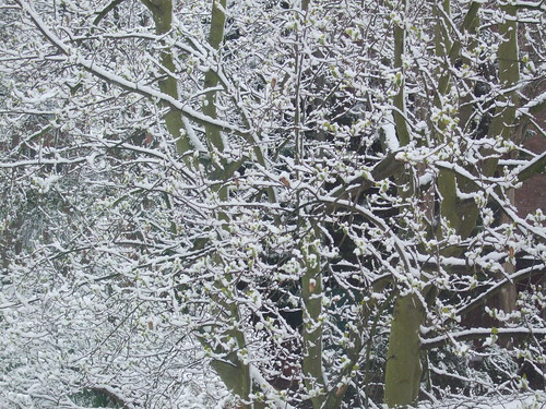 Bare snowy tree