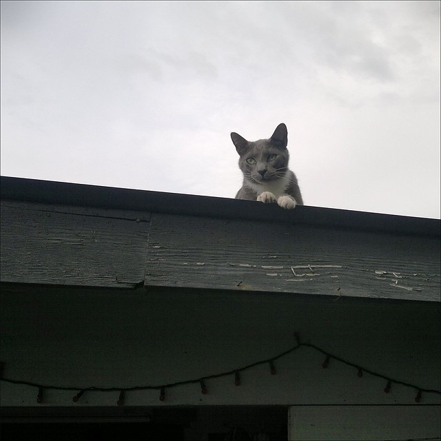 Cat on a Warm Tin Roof