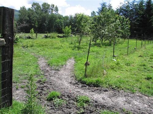 Orchard May 05 (Medium)