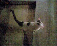 513cat_20080203