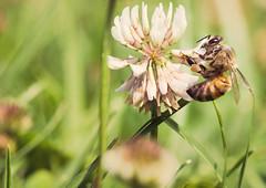 bee is for bokeh wednesday!