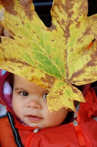 Peek-a-Leaf