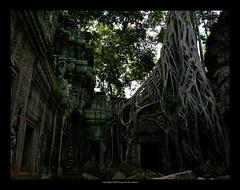 Ta Prohm Temple, Cambodia  417