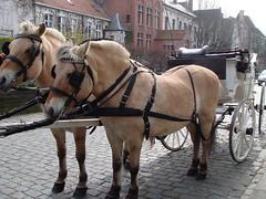 Fjord horses pulling carriage, Antwerp