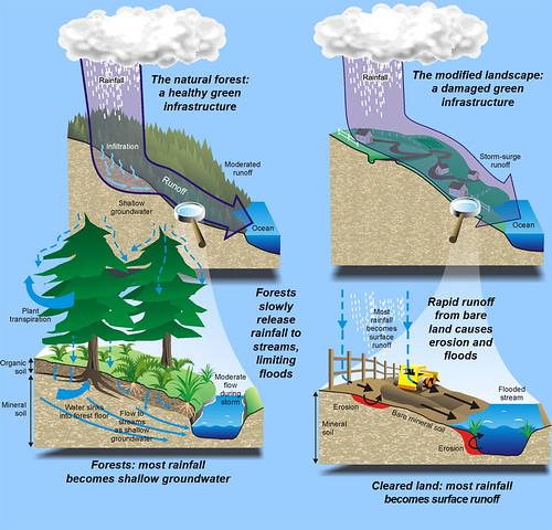 Deforestación y inundaciones