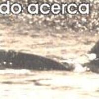 La increíble historia de Roberto Bubas, el amigo de las Orcas. Con video, foto y audio.