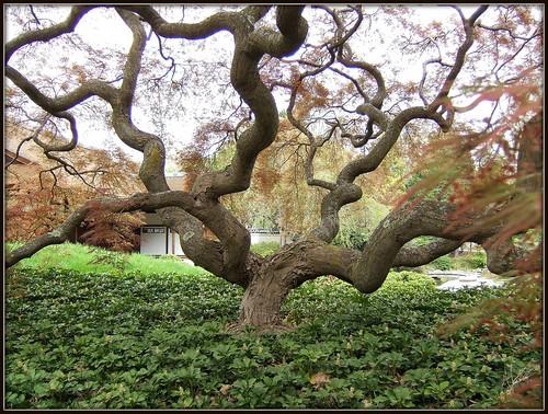 Twist in a Japanese Garden