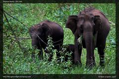 BRHills-ElephantFamily
