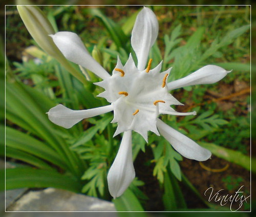 Wild-Lilly01