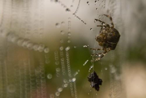 Spider hunting - Joe Houghton