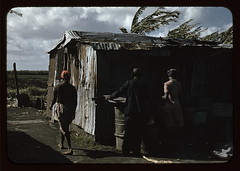 Negro migratory workers and one shack, Belle G...
