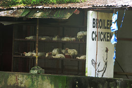 broiled chicken, funny