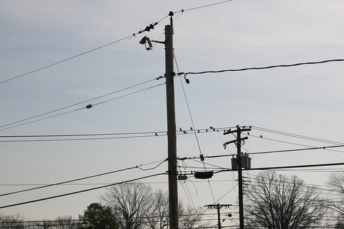 Wires, Birds, and Trees