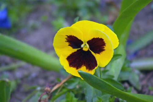 yellow flowers, istanbul, pentax k10d