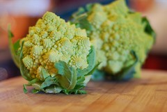 Romanesque Broccoli