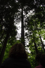 It's Hard to Photograph a 400 year old Tree in an Old Growth Forest