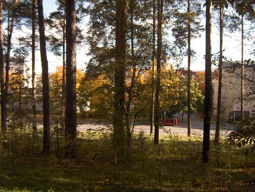 Trees & Street in autumn