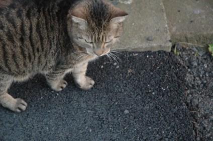 Jeg tror Biggen, katten min, ligner på Ian