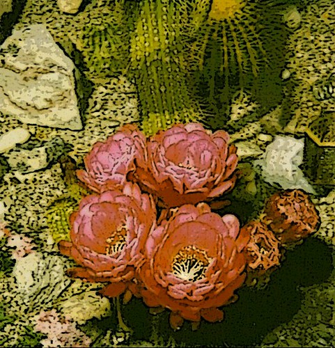 Cactus Blossom - Manipulated Polaroid-1