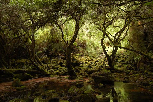bosque forest